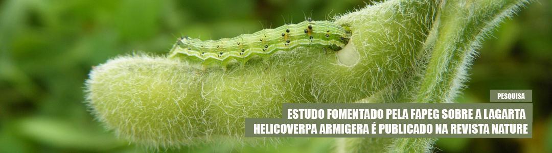 Estudo sobre lagarta Helicoverpa armigera na revista Nature