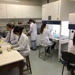 laboratório pesquisa citomegalovírus