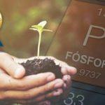 sustentabilidade do fósforo no brasil