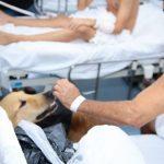 Terapia assistida por animais com pacientes